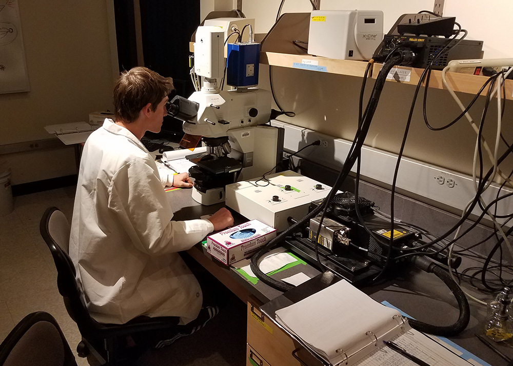 A student uses the Confocal Microscope