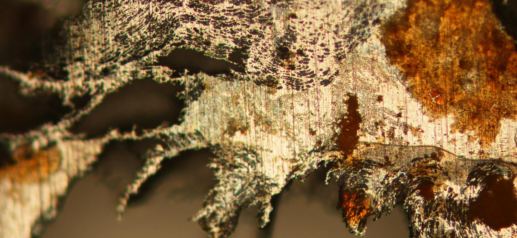 An optical micrograph of corroded stainless steel