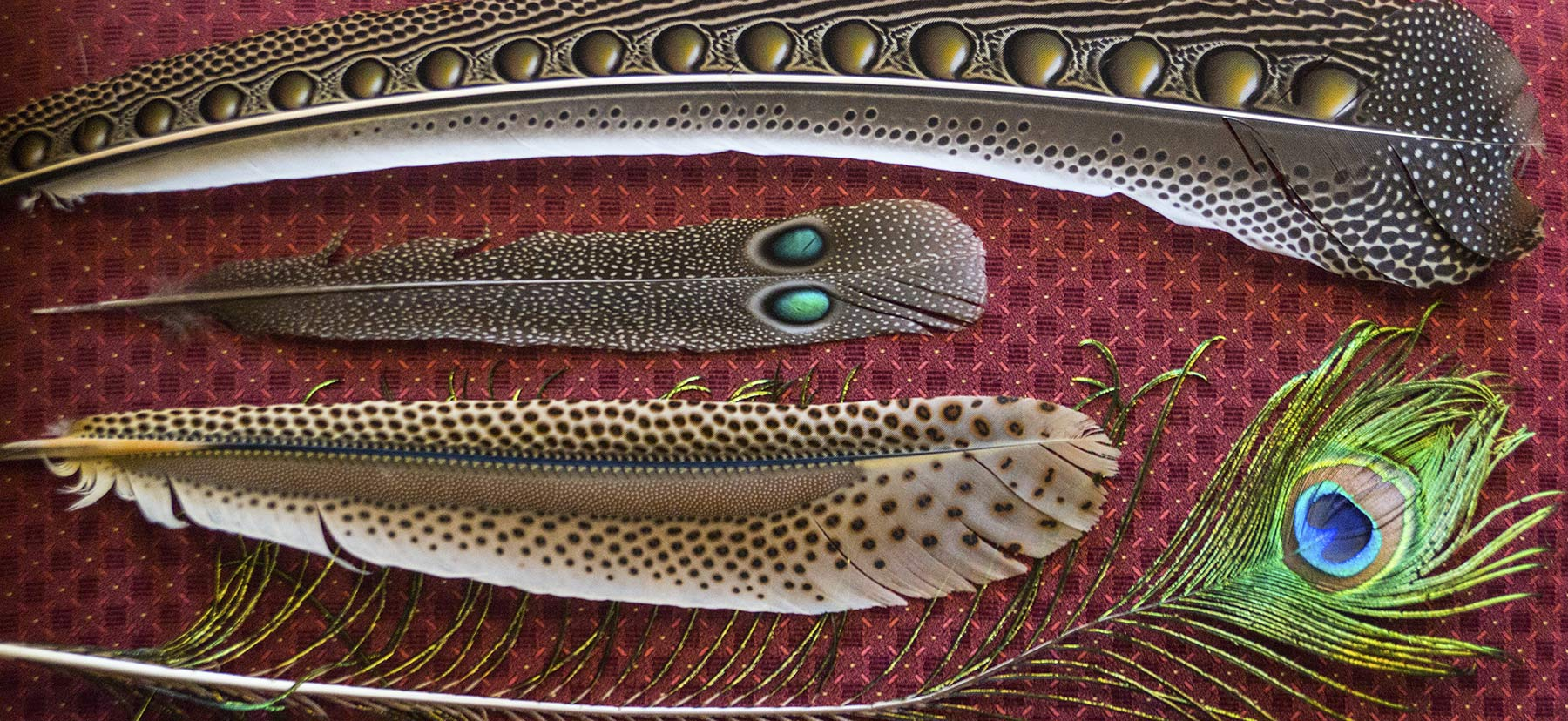 Various feathers featuring intricate patterns