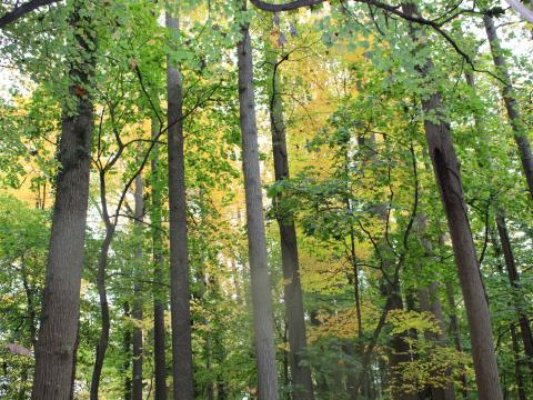 Trees along the nature trail in autumn. Photo: Sheena Dwyer-McNulty '23.