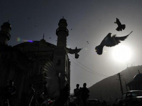 Silhouette of birds flying across a sky