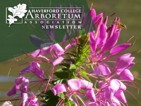 Spring 2019 Arboretum Newsletter - Cleome Bloom