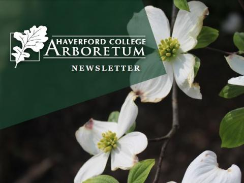 Cornus florida - Spring 2021 Newsletter