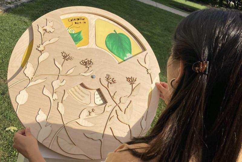 A picture of someone holding the butterfly wheel. The wheel has laser-cut milkweed, a spinning illustration of the life-cycle, and facts about monarchs.