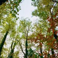 A view looking up into the trees on the Nature Trail