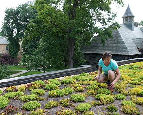 Atop the green roof of Stokes Hall