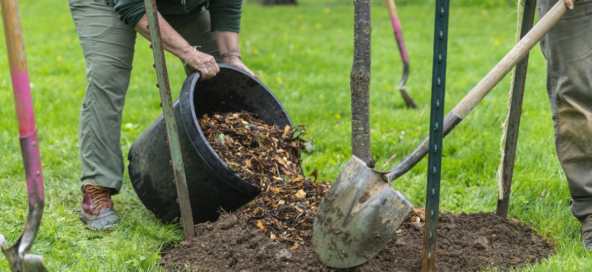Photo by Patrick Montero - Earth Week Tree Planting