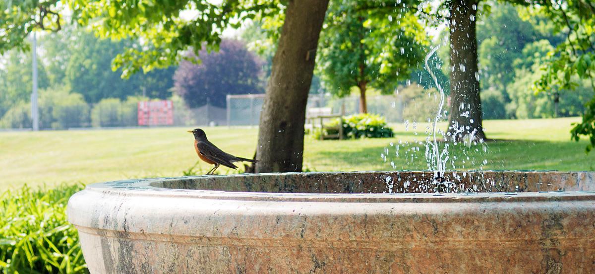 A robin perched on the edge of a birdbath