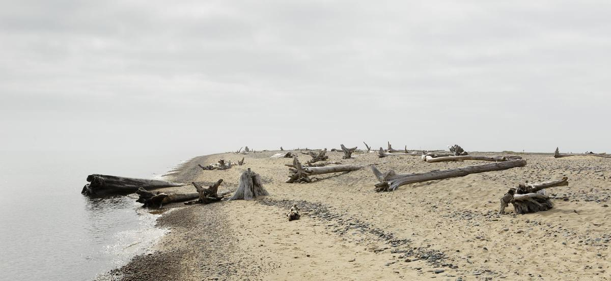 drift wood on a beach beneath a cloudy sky