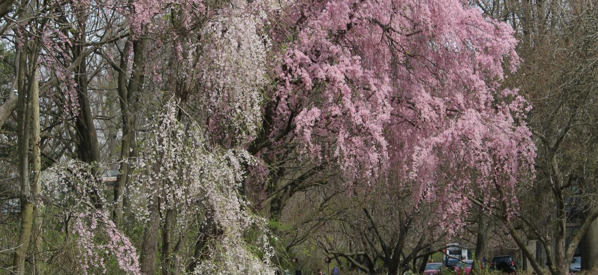 Nature Trail in April - Jennie Ciborowski