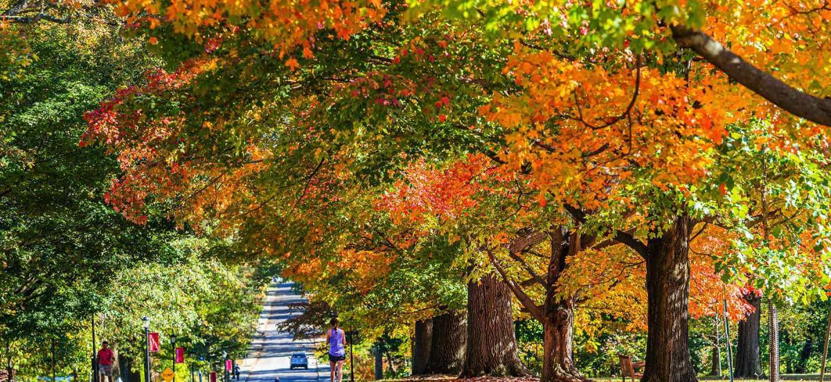 autumn on Haverford's arboretum campus