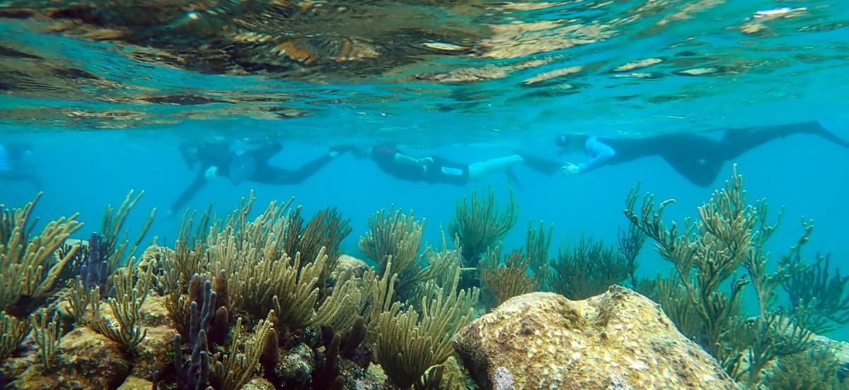 Several students snorkeling in clear turquoise waters of the Caribbean