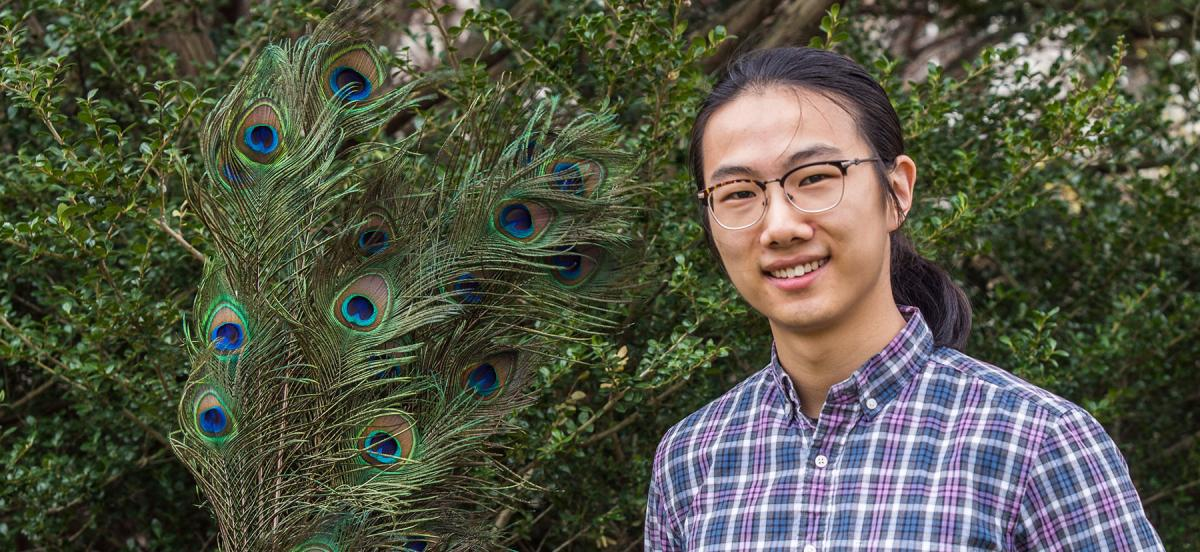 Yuchao Wang '20 poses with peacock feathers, the focus of his research