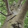 Arboretum newsletter