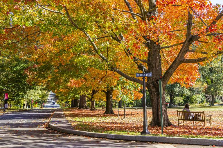 a bench beneath a tree surrounded by fall leaves